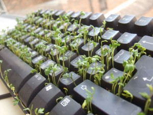 Lepidium sativum - Cress growing in a keyboard. - Author wetwebwork